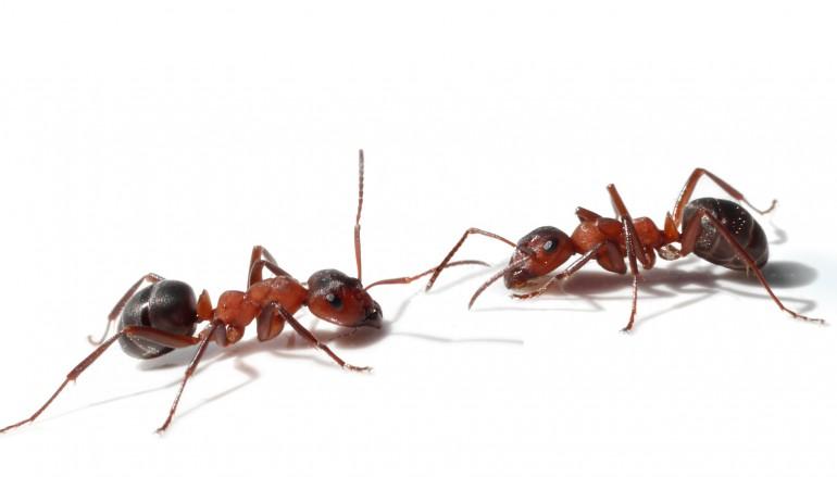 invasion de fourmis traitement des fourmilieres sur lyon roanne villeurbanne. Black Bedroom Furniture Sets. Home Design Ideas