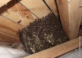 Mouches sur fa ades meurt aux fenetres invasion mouches - Invasion de mouches pourquoi ...
